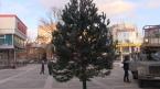 Новые елки