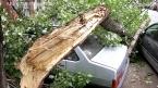 В центре Саратова дерево придавило три автомобиля