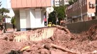 Видеоблог. Спиленные каштаны не мешали строительству парковки