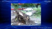 Упавшее дерево перекрыло движение по ул. Рахова
